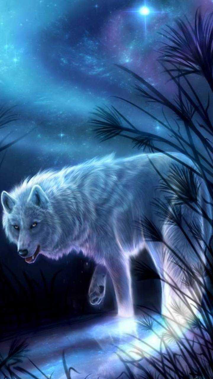 4k Wolf Wallpaper Ixpap